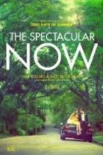 The Spectacular Now ( 2013 )