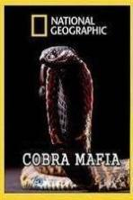 National Geographic Cobra Mafia ( 2015 )