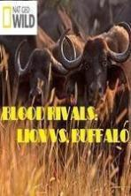 National Geographic - Blood Rivals: Lion vs. Buffalo ( 2015 )