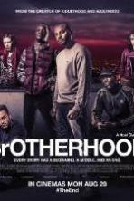 Brotherhood ( 2016 )