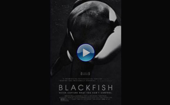 Blackfish Online